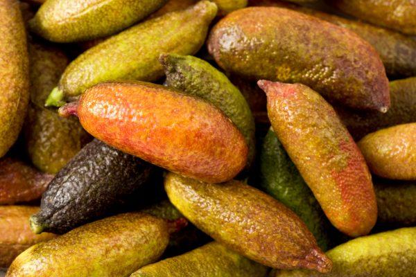 I frutti del finger lime © Fotolia