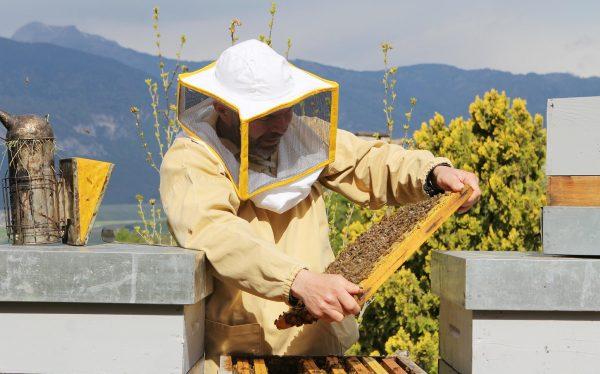 Andrea Paternoster con le sue api - Fonte: Ufficio stampa