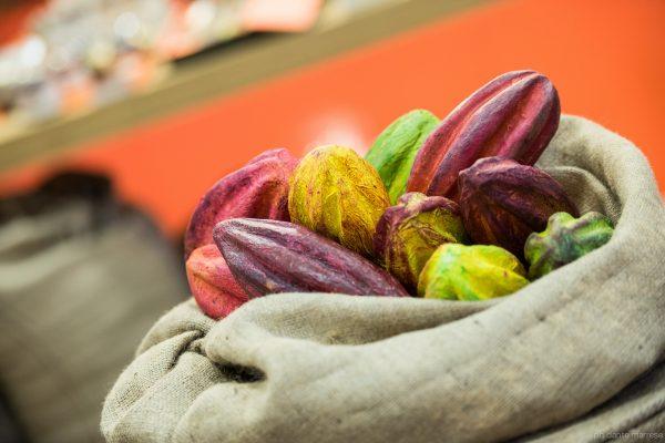 Le fave di cacao - Fonte: Ufficio stampa