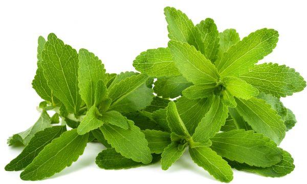 Foglie fresche di Stevia © Fotolia