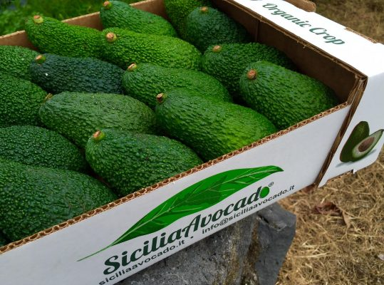L'avocado siciliano nasce alle pendici dell'Etna © Sicilia Avocado