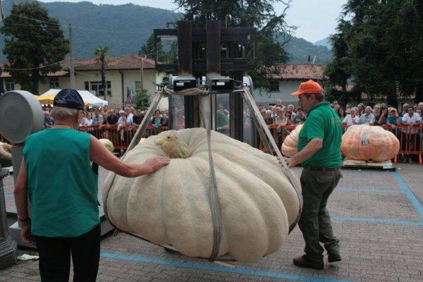 La zucca più grande d'Italia pesa © Sale in Zucca