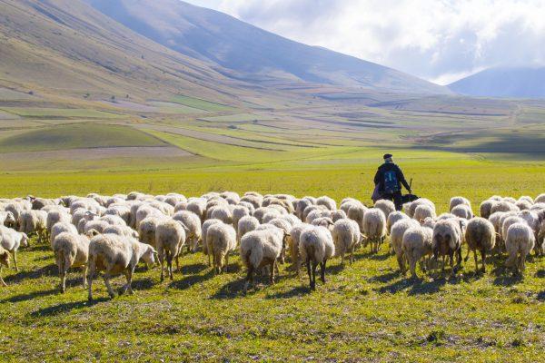 Un pastore con gregge di pecore sui monti Sibillini © Fotolia