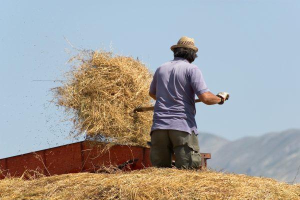 La trebbiatura delle lenticchie a Castelluccio di Norcia © Fotolia